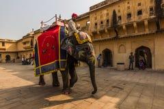 4 novembre 2014: Elefante al palazzo ambrato a Jaipur, India Immagine Stock Libera da Diritti