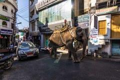 7 novembre 2014: Elefante nella vecchia città di Udaipur, India Immagine Stock