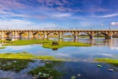 13 novembre 2014 : Taureau dans le paysage autour de Madurai, Inde Photos libres de droits