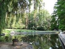 Novi Sad - parc de Danube images stock