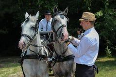 Novi Sad, Serbia, 20 05 2018 jarmark, dwa dwa konia, stangretów i białych Obrazy Stock