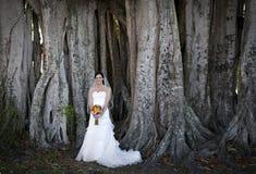 Novia bajo árbol Imagen de archivo libre de regalías