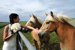 Novia con los caballos Imagen de archivo