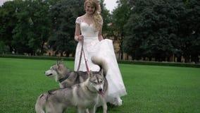 Novia con los perros fornidos almacen de metraje de vídeo