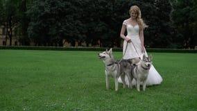 Novia con los perros fornidos metrajes