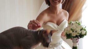 Novia con su gato querido en su día de boda Mi gato preferido en el día de boda almacen de video