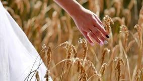 Novia de la mano en campo de hierba en puesta del sol Ciérrese encima de la mano de la mujer que lleva a cabo la naturaleza del s almacen de metraje de vídeo
