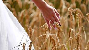 Novia de la mano en campo de hierba en puesta del sol Ciérrese encima de la mano de la mujer que sostiene el sol de la tarde de l almacen de video
