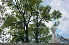 Novia en el fondo de árboles grandes Imágenes de archivo libres de regalías