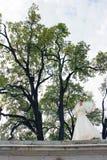 Novia en el fondo de árboles grandes imagen de archivo