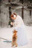Novia en el invierno que juega con el perro Imágenes de archivo libres de regalías