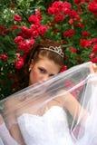 Novia en las rosas rojas Foto de archivo