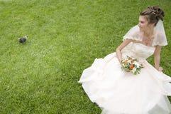 Novia joven en una hierba con la paloma Fotos de archivo