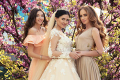 Novia magnífica en el vestido de boda lujoso, presentando con las damas de honor hermosas en vestidos elegantes Fotos de archivo libres de regalías