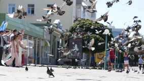 Novia que corre a través de la multitud de palomas almacen de video