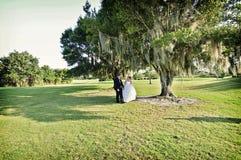 Novia y novio bajo árbol Foto de archivo libre de regalías