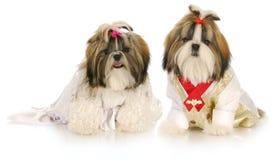 Novia y novio del perro Fotografía de archivo libre de regalías