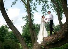 Novia y novio en el árbol Fotos de archivo libres de regalías