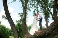 Novia y novio en el árbol Fotografía de archivo