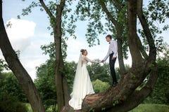 Novia y novio en el árbol imagenes de archivo