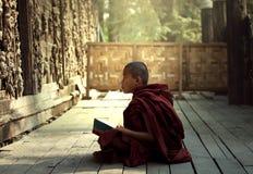 Novice Burma royalty free stock image