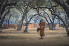Novice monk royalty free stock photo