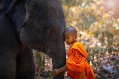 Free Novices Or Monks Hug Elephants. Novice Thai Standing And Big Elephant With Forest Background. , Tha Tum District, Surin, Thailand Royalty Free Stock Images - 153189209