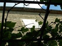 Novigrad Kroatien, fjäril, tusenskönor, fält som är härligt, sjösida, stad, rich, historia arkivfoton