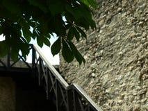 Novigrad Kroatien, fjäril, tusenskönor, fält som är härligt, sjösida, stad, rich, historia royaltyfri fotografi