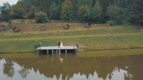 Novio con la novia cerca del lago en el parque Pares de la boda Tiro aéreo almacen de metraje de vídeo