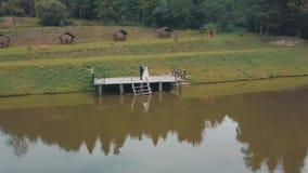 Novio con la novia cerca del lago en el parque Pares de la boda Tiro aéreo almacen de video