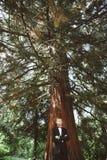 Novio que se coloca debajo de árbol Imagen de archivo libre de regalías