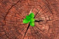 Novità e rinnovamento come concetto di affari di successo emergente di direzione Immagine Stock Libera da Diritti