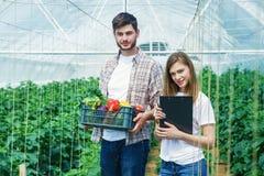 Novo e bonito, os fazendeiros estão guardando o fruto imagem de stock