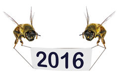 Novo feliz, 2016, ano! Fotografia de Stock