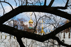 Novodevichy Convent ,tree ,ranch. Novodevichy Convent domes through tree branch royalty free stock photo