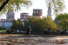 Novodevichy klasztor w Rosja Zdjęcia Royalty Free