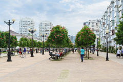 NOVOROSSIYSK, RUSSLAND - 8. MAI 2016: Kastanien-Allee auf dem Boulevard Chernyakhovsky Stockfotografie