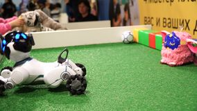 NOVOSIBIRSK ROSJA, LUTY, - 21, 2018: Dziecko sztuka z robot zabawki szczeniakiem 4k zbiory wideo