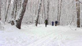NOVOSIBIRSK, RUSSIA - DECEMBER 24,2015: Skier in winter forest stock video