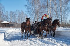 Troika of horses harnessed to a sleig. Slavonic folk late winter. NOVOSIBIRSK, RUSSIA - JANUARY 11, 2018: Troika of horses harnessed to a sleigh.  Slavonic folk Royalty Free Stock Image