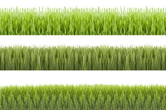 Novruz grass. Novruz green fertility wheat grass azerbaydjan Royalty Free Stock Photography
