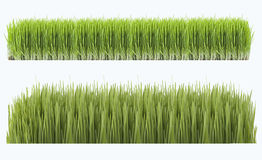 Novruz grass. Novruz green fertility wheat grass azerbaydjan Royalty Free Stock Photos