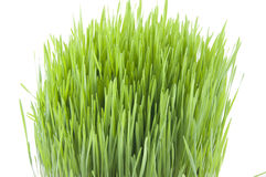 Novruz. Green fertility wheat grass azerbaydjan Royalty Free Stock Photos