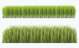 Novruz trawa Zdjęcia Royalty Free