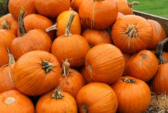 Now? how many pumpkins did you need? stock photography