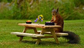 Now time to pamper the garden`s Squirrel, Sciurus vulgaris