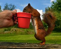 Now you have time to pamper the garden`s Squirrel, Sciurus vulgaris