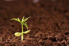 nowa życie roślina Obraz Royalty Free