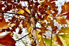Nowa Anglia drzewa Fotografia Stock
